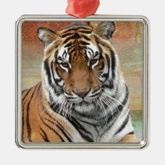 Ornement Carré Argenté Locations Tigres dans la contemplation