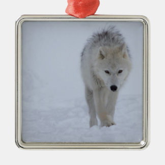 Ornement Carré Argenté Loup arctique