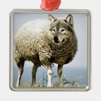 Ornement Carré Argenté Loup dans l'habillement du mouton