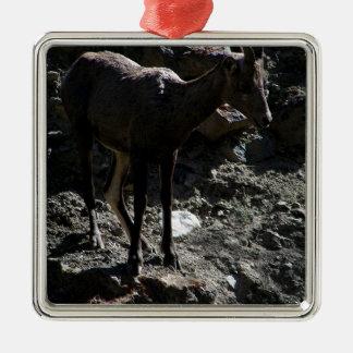 Ornement Carré Argenté Mouflons d'Amérique de montagne rocheuse, brebis