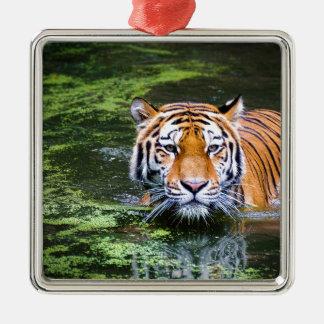 Ornement Carré Argenté Natation de tigre