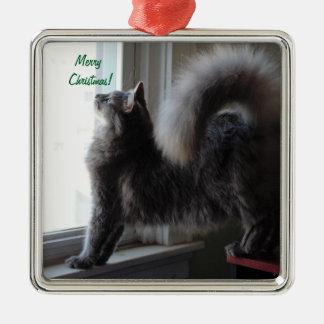 Ornement Carré Argenté Photo de chat de ragondin du Maine