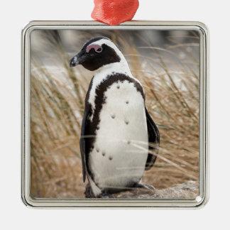 Ornement Carré Argenté Pingouin africain sur la plage