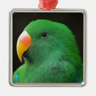 Ornement Carré Argenté Profil vert de perroquet