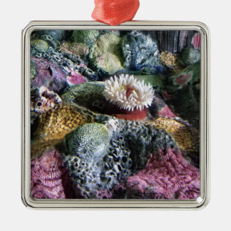 Ornement Carré Argenté Récif coralien d'aquarium sous-marin coloré