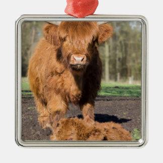 Ornement Carré Argenté Vache écossaise à montagnarde de mère près de veau