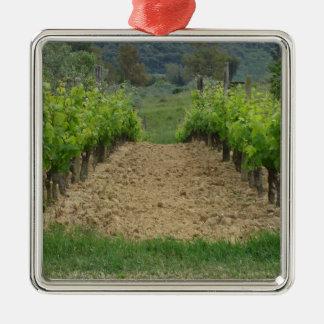Ornement Carré Argenté Vignoble au printemps. La Toscane, Italie