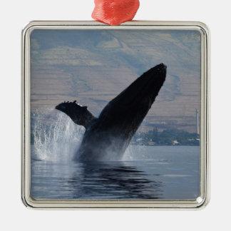 Ornement Carré Argenté violation de baleine de humback