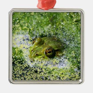 Ornement Carré Argenté Yeux de grenouille dans un étang