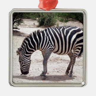 Ornement Carré Argenté Zèbre africain au zoo