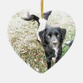 Ornement Cœur En Céramique Poses adorables de Smokey pour l'appareil-photo