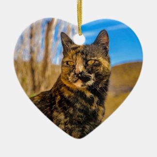 Ornement Cœur En Céramique Séance et observation sauvages adultes de chat