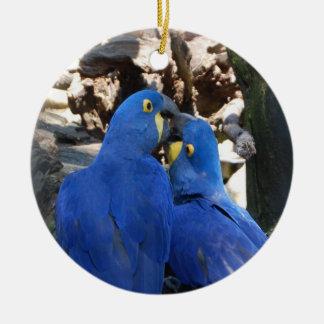 Ornement de cercle de perroquet