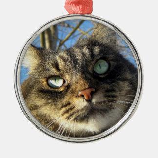 Ornement de chat de Kitty de ragondin du Maine