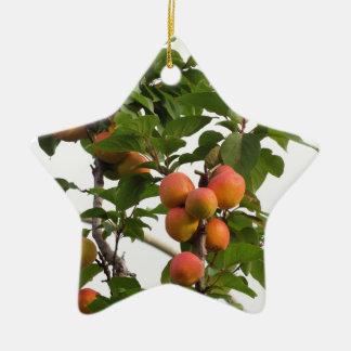 Ornement Étoile En Céramique Abricots mûrs accrochant sur l'arbre. La Toscane,