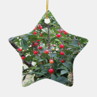 Ornement Étoile En Céramique Cerises rouges de Montmorency sur l'arbre dans le