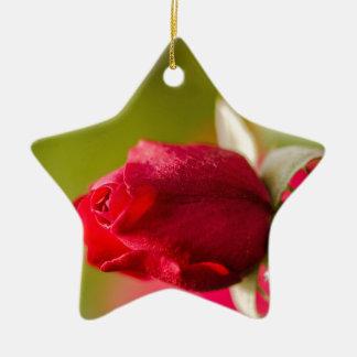 Ornement Étoile En Céramique Conception haute de fin de rose rouge