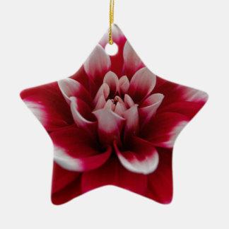 Ornement Étoile En Céramique Dahlia rouge et blanc (hortensis de dahlia X)