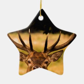 Ornement Étoile En Céramique mâle de parc de richmond