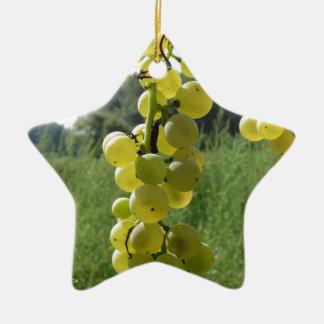Ornement Étoile En Céramique Raisins blancs sur la vigne. La Toscane, Italie