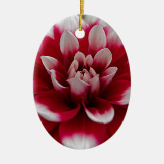 Ornement Ovale En Céramique Dahlia rouge et blanc (hortensis de dahlia X)