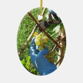 Ornement Ovale En Céramique Main coupant les raisins blancs, temps de récolte
