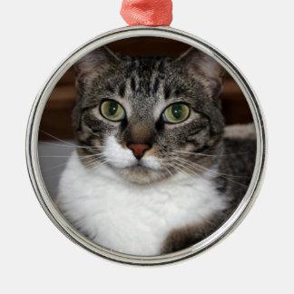 Ornement Rond Argenté Chat tigré vous regardant photo