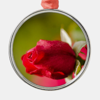 Ornement Rond Argenté Conception haute de fin de rose rouge