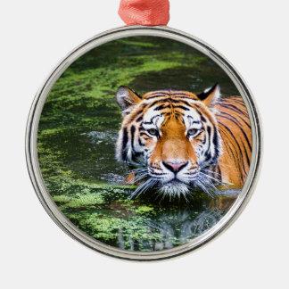 Ornement Rond Argenté Natation de tigre