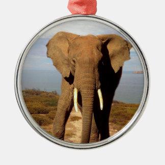 Ornement Rond Argenté Sortie de jour de plage d'éléphant,
