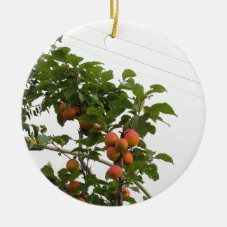 Ornement Rond En Céramique Abricots mûrs accrochant sur l'arbre. La Toscane,
