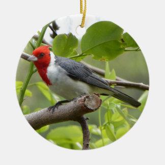 Ornement Rond En Céramique Cardinal à crête rouge
