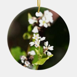 Ornement Rond En Céramique Fleurs d'un plante de sarrasin (Fagopyrum