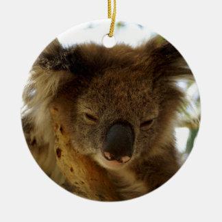 Ornement Rond En Céramique Koala sauvage dormant sur l'arbre d'eucalyptus,
