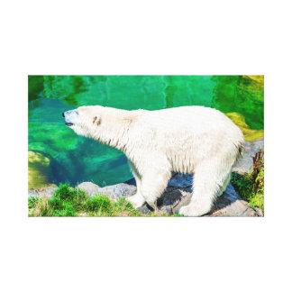 Ours blanc de toile