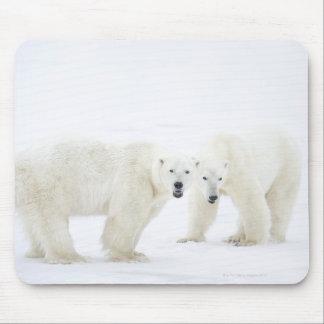 Ours blancs se tenant sur la neige après le jeu de tapis de souris