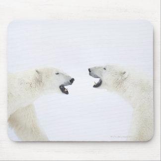 Ours blancs se tenant sur la neige après le jeu tapis de souris