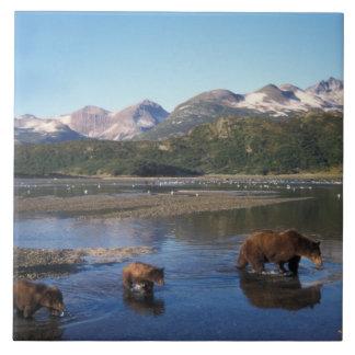 Ours de Brown, ours gris, truie et petits animaux  Grand Carreau Carré