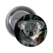ours_de_koala_mignon_pins-r50aeda4828fc4