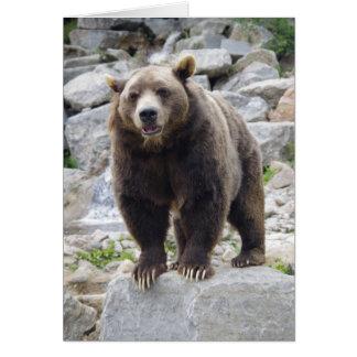 Ours de Kodiak se tenant sur une roche Carte