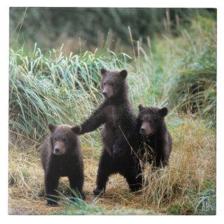 Ours gris, ours brun, petits animaux dans les herb grand carreau carré