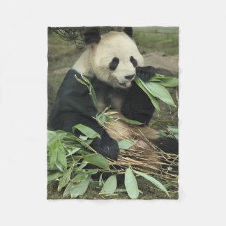 Ours panda mignon mangeant la couverture d'ouatine