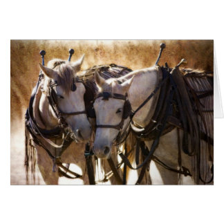 Paarden in het Wenskaart van de Uitrusting