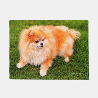 Paillasson Reine adorable de Pomeranian de la pelouse