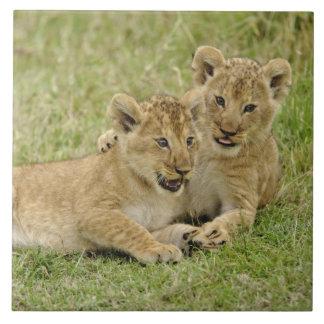 Paires de petits animaux de lion jouant, jeu de Ma Grand Carreau Carré