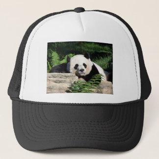 Panda géant faisant une sieste casquette