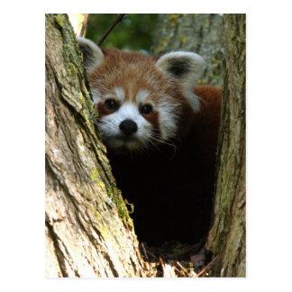 Panda rouge carte postale