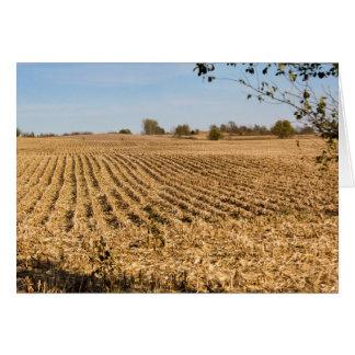 Panorama de champ de maïs de l'Iowa Vide-À Carte