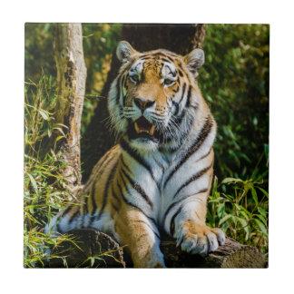 Panthera Tigre Altaica de tigre d'Amur de tigre si Petit Carreau Carré