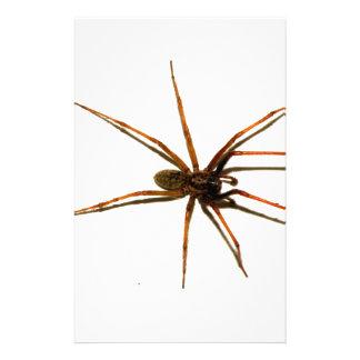 Papeterie Araignée